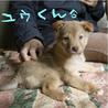 箱詰めの捨て兄妹子犬2ヶ月薄茶色<大阪府> サムネイル2