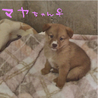 箱詰めの捨て兄妹子犬2ヶ月薄茶色<大阪府> サムネイル3