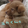 箱詰めの捨て兄妹子犬2ヶ月薄茶色<大阪府> サムネイル5