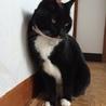 ソックス黒猫♀・超いいこです!