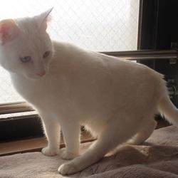 みなと猫の会譲渡会 名古屋市西区 サムネイル1