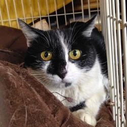 みなと猫の会譲渡会 名古屋市西区 サムネイル3