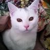 白猫兄弟ゴマ君&シオちゃん里親さん決定