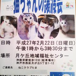 2/22(日)猫の譲渡会 神戸