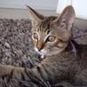 みなとねこ(東京都港区の主婦らによる地域猫ボランティア)