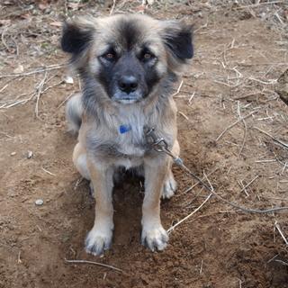人懐こく若い雑種犬【エヴァ】