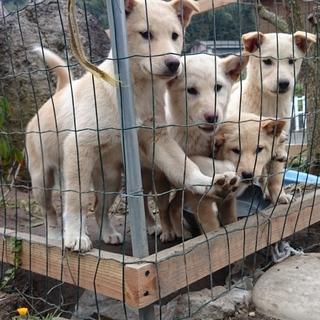 人懐っこい仔犬4匹