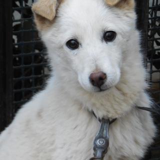 劣悪な環境にいる仔犬を助けてください。