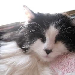 みなと猫の会譲渡会 名古屋市西区