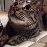 生後3年の猫ちゃんです