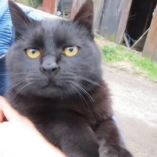 黄金の瞳の黒猫君