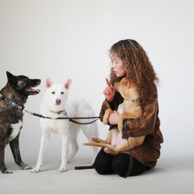 一般社団法人動物愛護協会PHILIA-NET(フィリアネット)のカバー写真