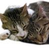 地域猫をサポートする会(保護活動者)