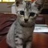 やんちゃでカワイイ子猫