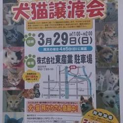 グリーンNET主催!犬猫譲渡会!