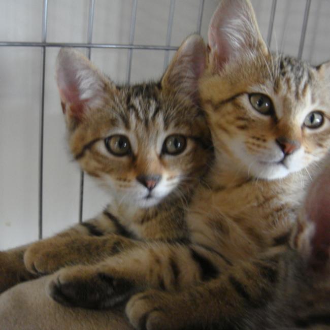 倉敷猫まもりの会のカバー写真
