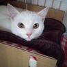 白猫あいちゃん 応募者多数のため募集終了致します。