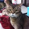 15歳のおじいちゃん猫、じわじわくるかわいさです。