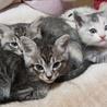生後1ヶ月半の赤ちゃん猫☆