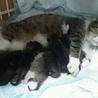 生後1ヶ月の7仔猫たち:内5猫さんの里親様決定 サムネイル5