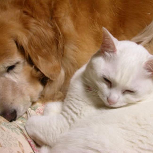 42825+centime(サンチーム)+北新宿ちいき猫の会のカバー写真