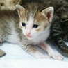 生後1ヶ月の7仔猫たち:内5猫さんの里親様決定