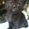 生後1ヶ月の7仔猫たち:内5猫さんの里親様決定 サムネイル3