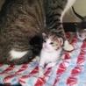 生後1ヶ月の7仔猫たち:内5猫さんの里親様決定 サムネイル4