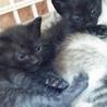 生後1ヶ月の7仔猫たち:内5猫さんの里親様決定 サムネイル7