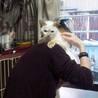 子猫のような性格のシャムmixの女の子  サムネイル4
