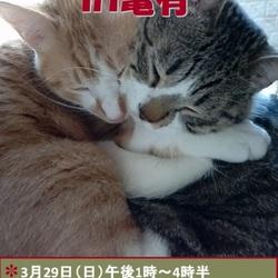 猫の里親会