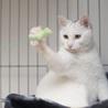 福島県産新米!白猫少年 「ぼく、こめたろうです」 サムネイル2