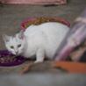 福島県産新米!白猫少年 「ぼく、こめたろうです」 サムネイル7