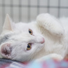 福島県産新米!白猫少年 「ぼく、こめたろうです」 サムネイル6