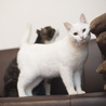 福島県産新米!ツヤツヤ白猫 まんまる顔の「いね」 サムネイル3