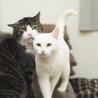 福島県産新米!ツヤツヤ白猫 まんまる顔の「いね」 サムネイル6