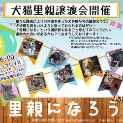 4月5日恵比寿ガーデンプレイスにて譲渡会!!