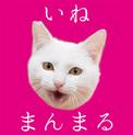 福島県産新米!ツヤツヤ白猫 まんまる顔の「いね」