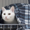 福島県産新米!白猫少年 「ぼく、こめたろうです」 サムネイル3