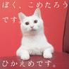 福島県産新米!白猫少年 「ぼく、こめたろうです」