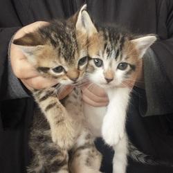 今年最初の子猫たち保護