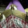 ミニウサギの子ウサギ