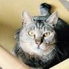 猫が大好き、若年寄のぽちゃ猫トラちゃん