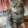 タヌキ顔の優しいゴロスリ猫!
