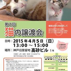 4/5(日)神戸三宮で猫の譲渡会 主催:猫のミーナ