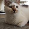 ちょいブサがかわいい子猫!