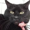 引っ込み思案なムクムク黒猫!