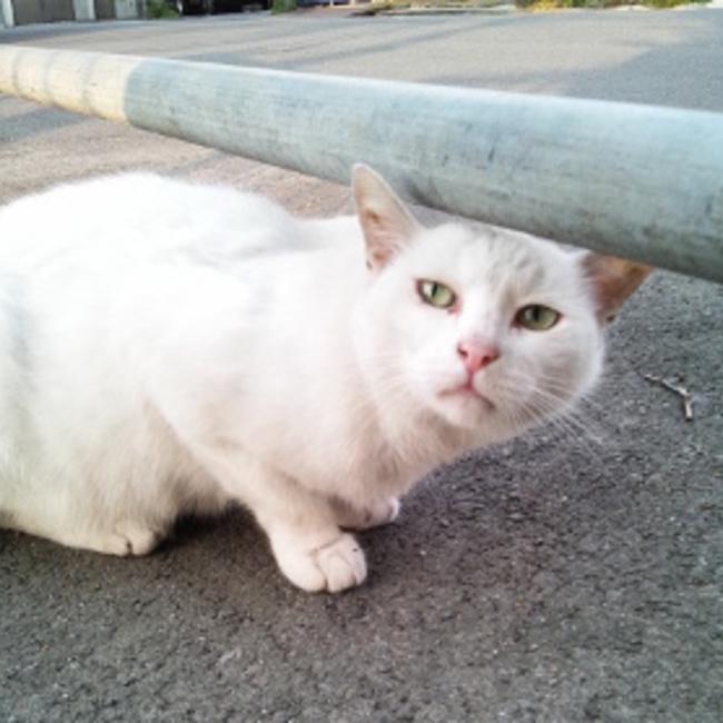 猫と暮らそう~里親募集のカバー写真