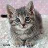 グレーの兄弟猫