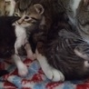 賢いママ猫さん:娘猫と一緒に里親様決定! サムネイル6